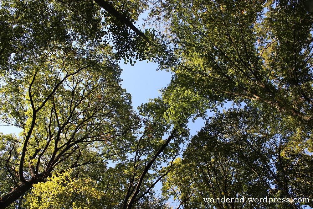 ab in den Wald... ab jetzt kann man wieder das Grün genießen