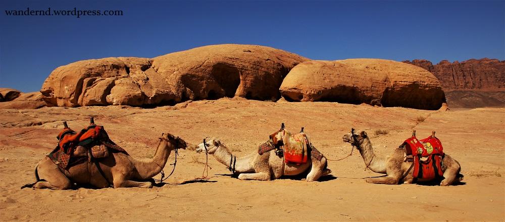 Kamel Wadi Rum 6