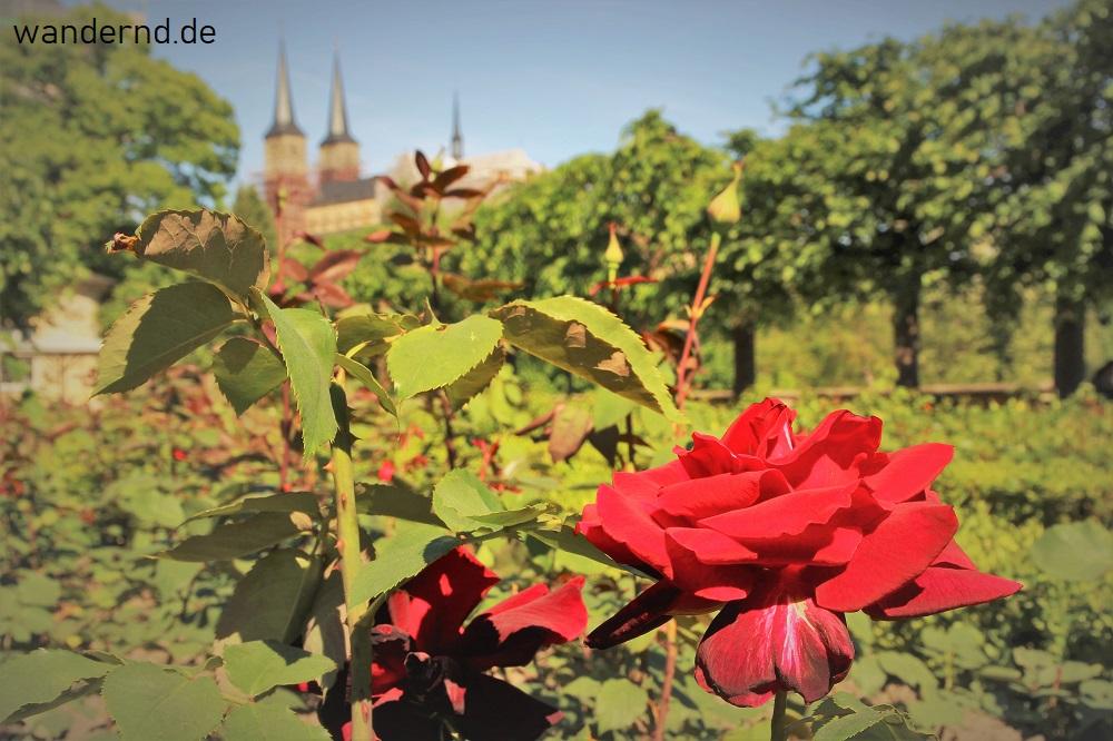 Tipps: Bamberg Rosengarten