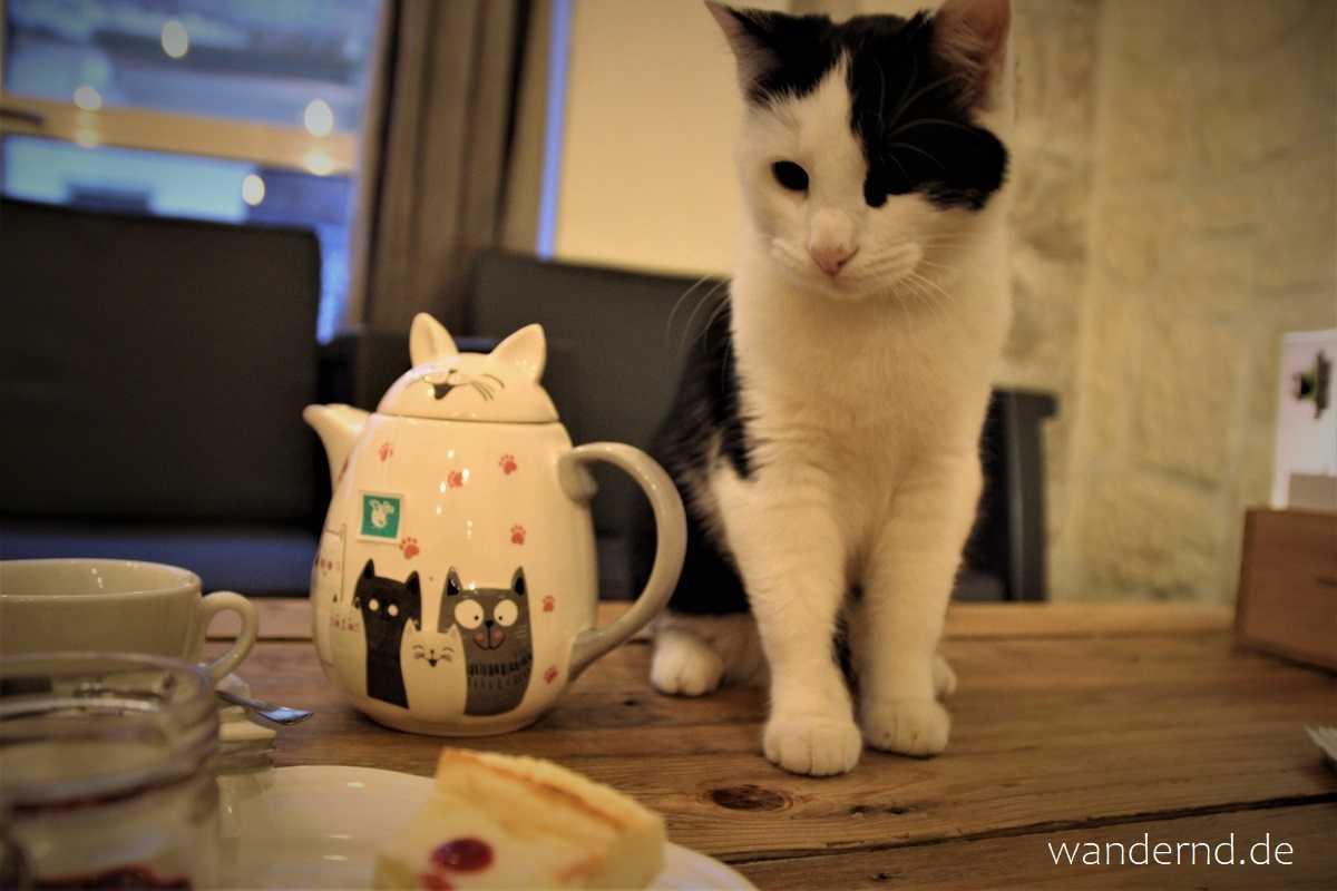 Avignon Tipp: Das Katzencafé
